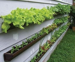 Veggie_Gutter_Windowbox